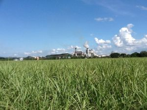 Sugar Central across the cane fields