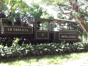 Sugarcane used to be hauled in cars pulled by this locomotive.