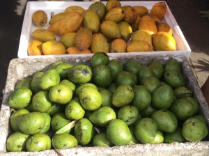 Green mangos and another variety of mango