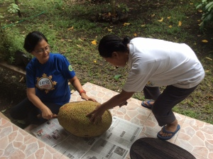 Laurie steadies the jackfruit or langka while Luing prepares to slay it