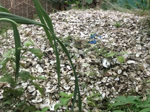 A midden of oyster shells next to Neneng's house