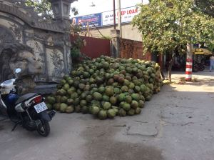 A pile of coconuts outside a Buddhist temple in Bien Hoa - part of the Têt celebration