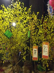 "Each of the blossoms (silk and plastic) is wired onto the ""apricot tree"".  The green packages hanging from the branches represent ""bánh trưng"", cakes made of glutinous rice, mung beans and pork."