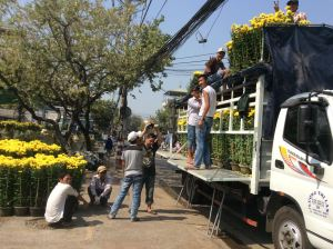 Unloading yellow mums!