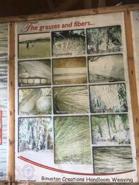 Binuatan Grasses